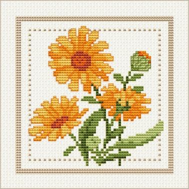 calendula pattern image